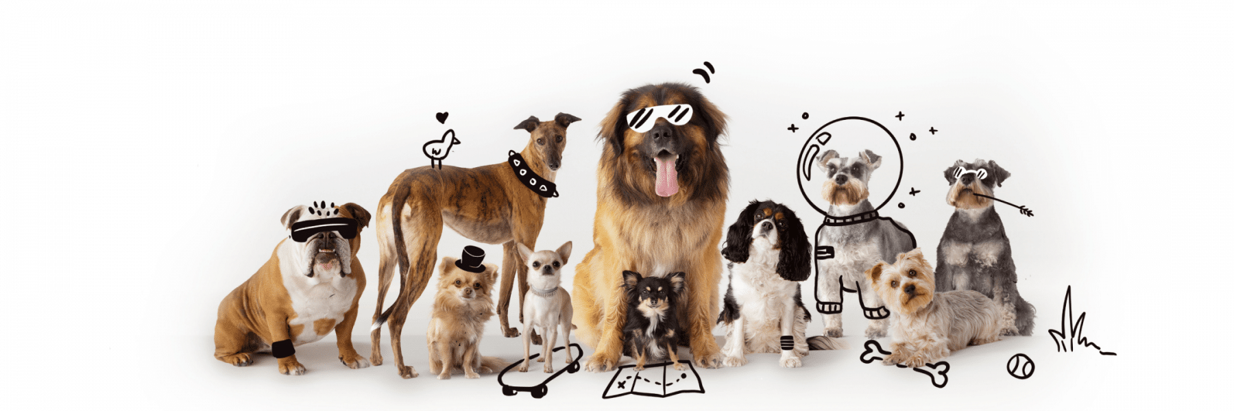 10 Common Dog Breed Misconceptions