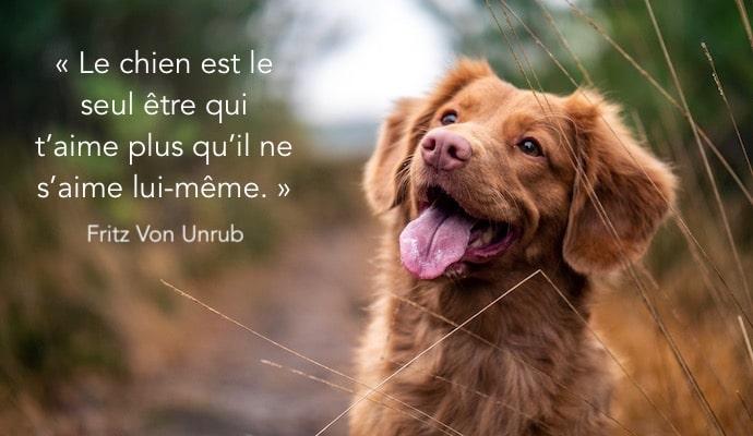 chien qui sourit avec citation