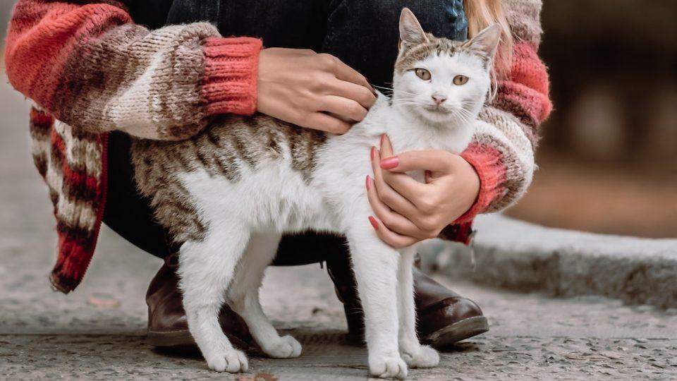 human wearing sweater embracing cat