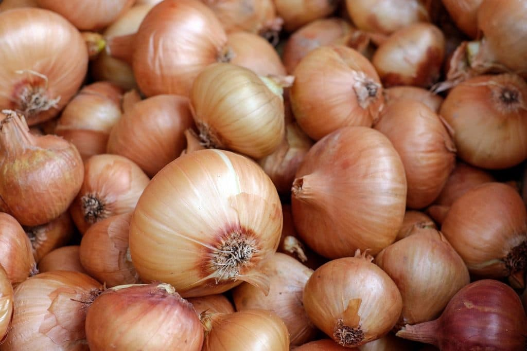 Are Onions Dangerous for Dogs? A Vet