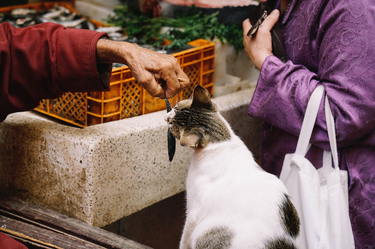 Can Cats Eat Tuna What You Should Know Before Feeding Them