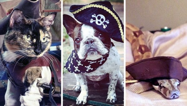 21 Pets in Costumes for 'Talk Like a Pirate' Day