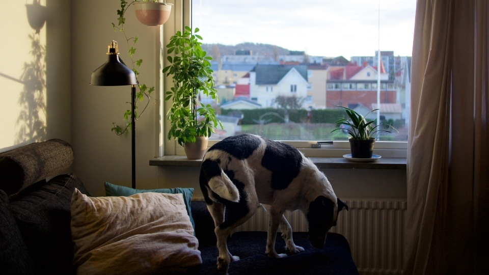 15 Piante Da Appartamento.15 Piante Da Appartamento Velenose Per I Cani The Dog People By