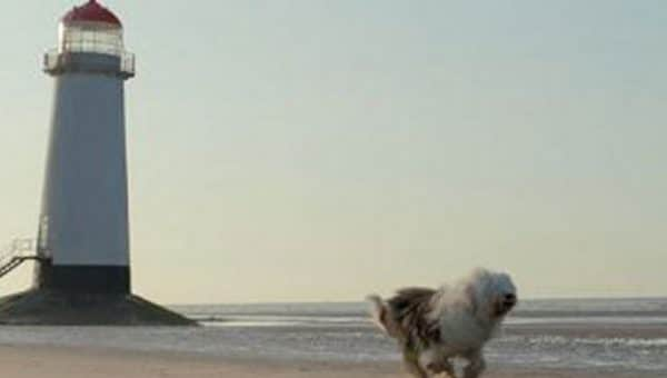 Top 10 Dog-Friendly Beaches in North Wales