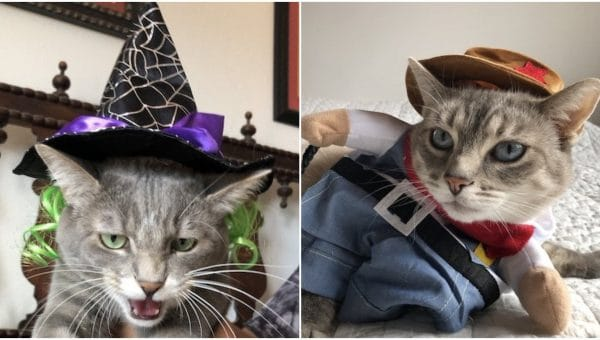 Top Halloween Cat Costumes: 18 Rover-Rated Costumes For Your Kitty