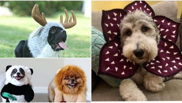 Dog and Owner Halloween Costumes | Dog and Human Costumes