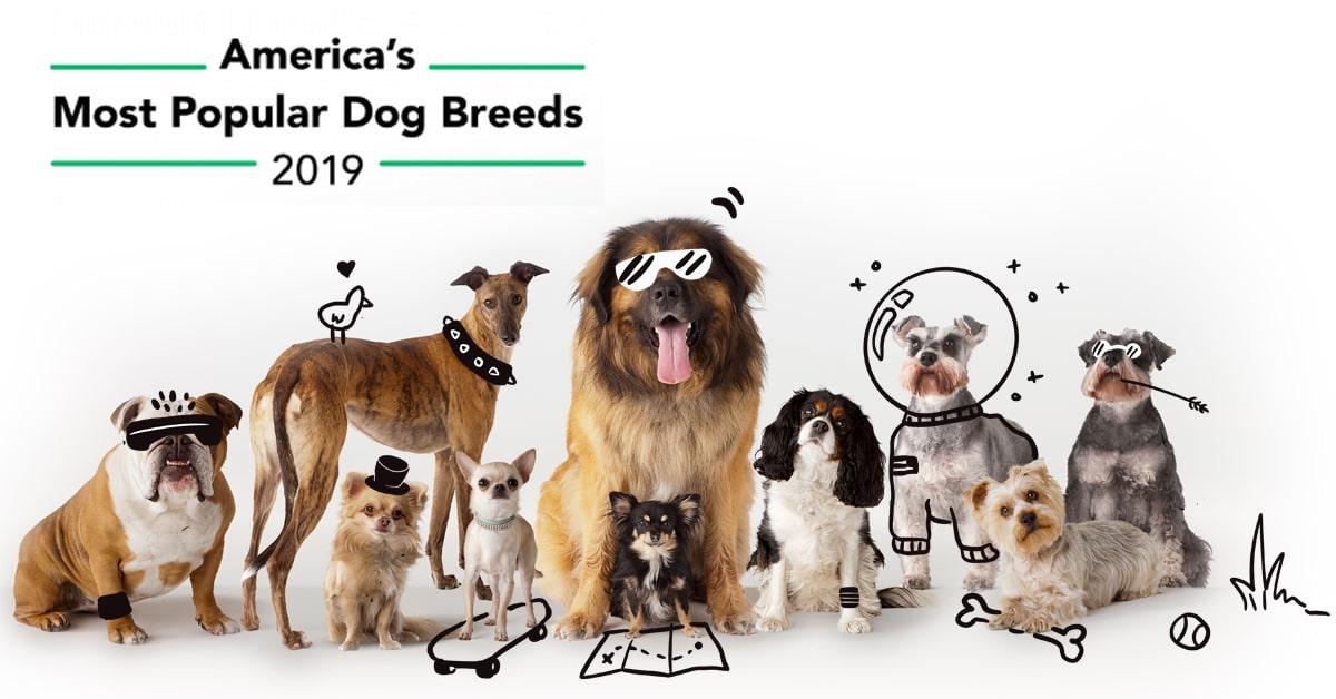 America S Most Por Dog Breeds The