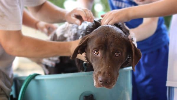 Help! My Dog Hates the Bath: A Trainer's Guide
