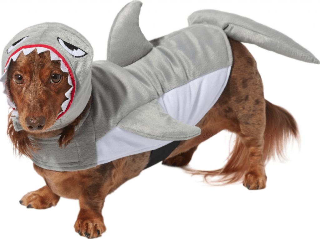 Frisco shark dog costume