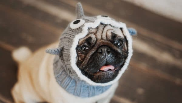 Top 9 Shark Costumes For Dogs