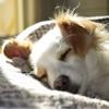 A dog cuddles into blankets