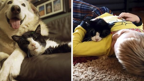 20 Year-Old Rescue Cat Spends Golden Years with the Perfect Family