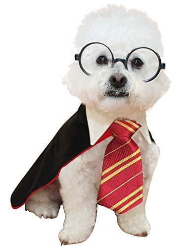 Harry Potter costume on dog