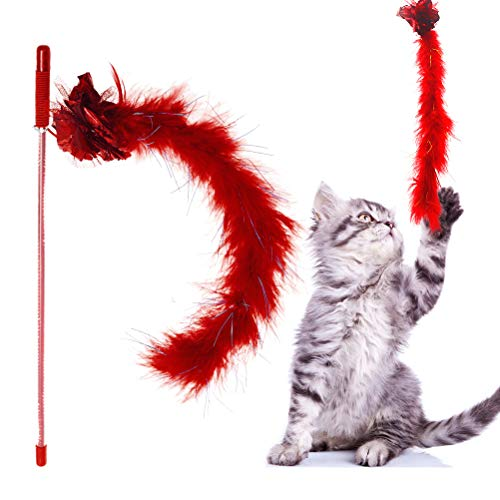 cat with red feather wand toy