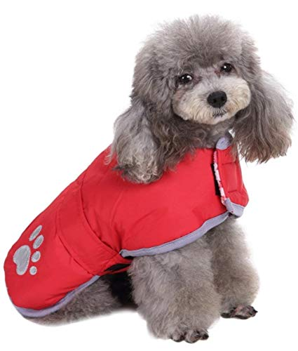 dog in reversible Queenmore vest