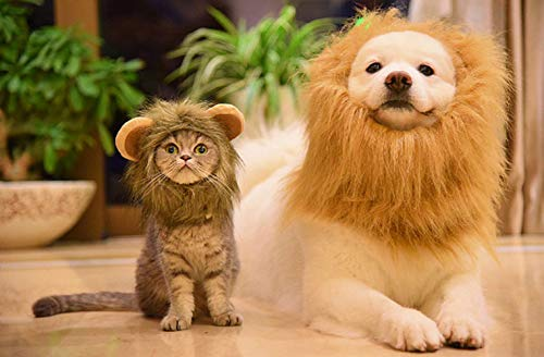 cat and dog in lion mane costumes
