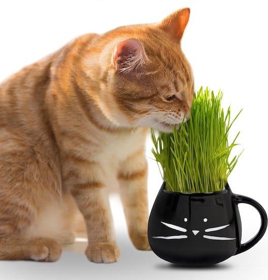 Cat Ladies pet grass grow kit