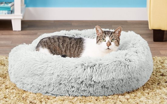 cat in Best Friends by Sheri round shag bed