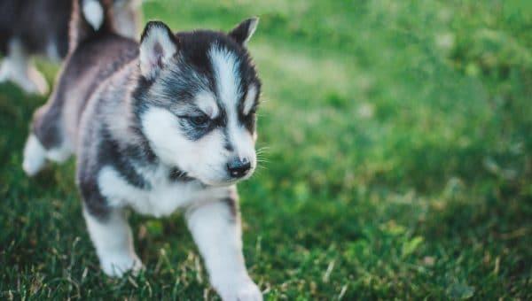 Hur du väljer det perfekta hundnamnet
