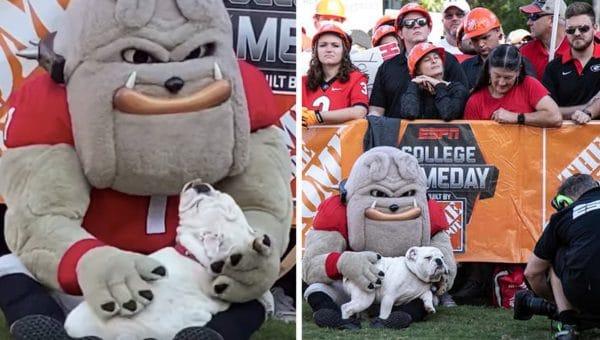 Bulldog Puppy Meets His Idol — the University of Georgia Bulldog Mascot [Video]