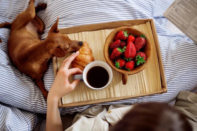chien dans le lit à côté de café et de fraises