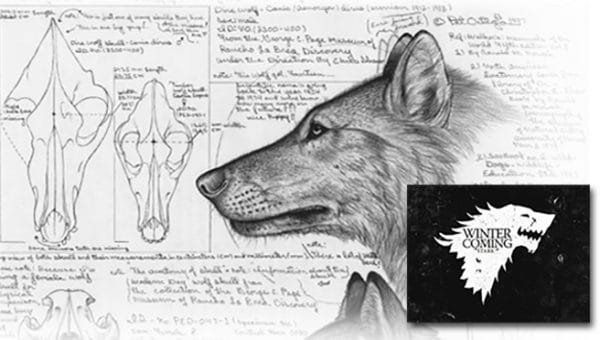 Dire Wolves Were Real and Much Scarier Than We Imagined