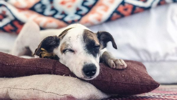 The 15 Best Dog Blankets to Keep Your Pup Snuggly and Warm