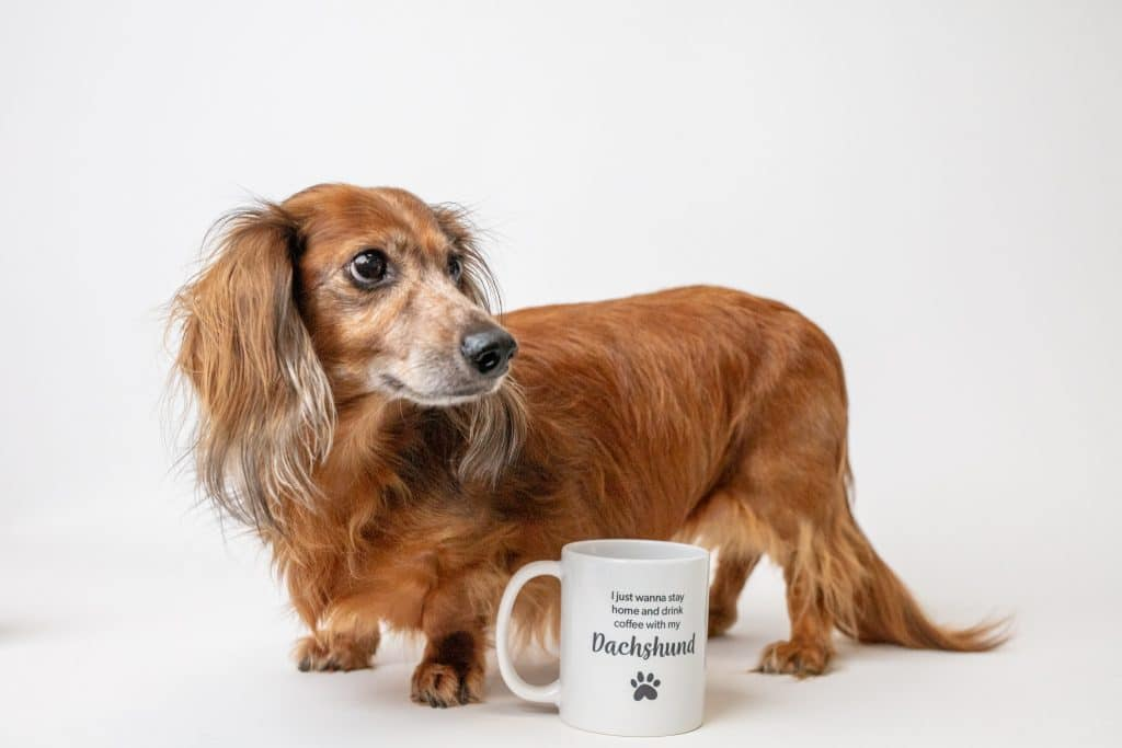 """A mug reading, """"I'd rather be drinking coffee with my Dachshund"""" with a paw print"""