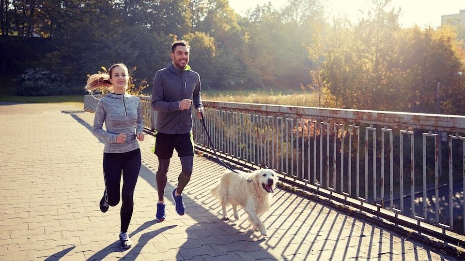 harnais canicross pour courir avec son chien