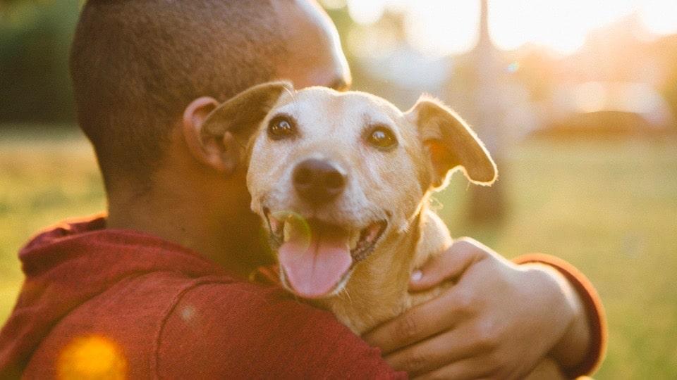 Comment adopter un chien ?