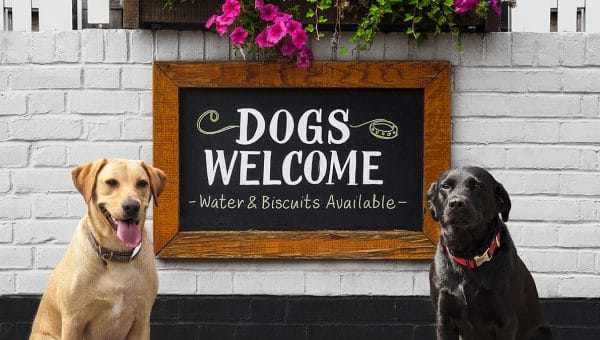 Meet the Judges for the 2019 Rover Dog-friendly Pub Awards: Sarah Wright