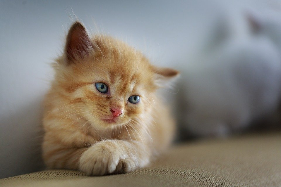 Can Cats Eat Carrots Nutrients Safety And More