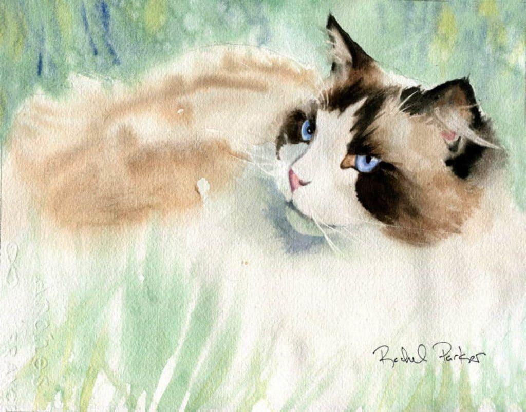 watercolor print of Ragdoll cat