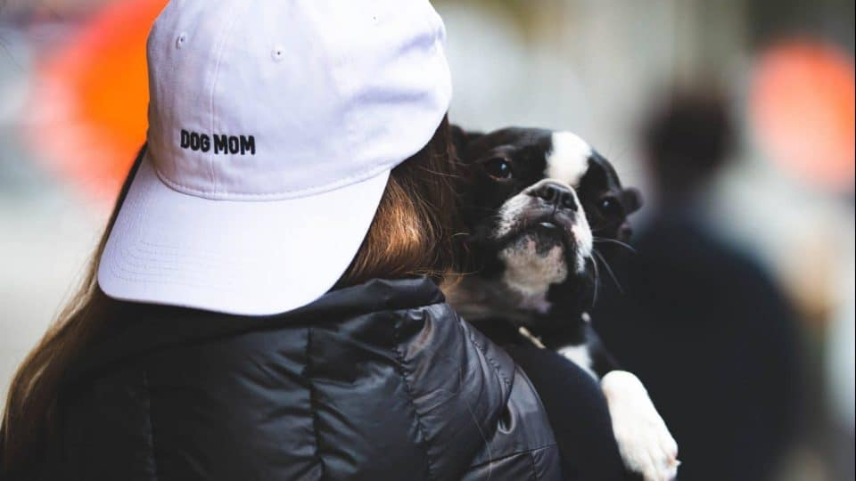 "A woman holding a Boston terrier wears a hat reading ""dog mom"""