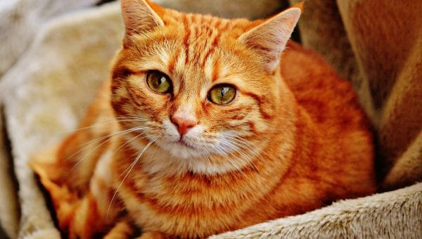 70+ Terrific Cat Names for a Tabby