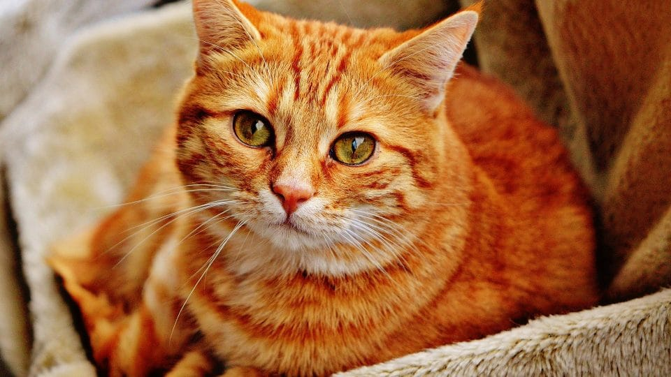 Cat Names For Tabby 70 Name Ideas That Are Truly Terrific