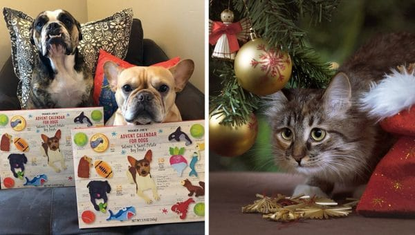 Trader Joe's Announces Advent Calendar — for Cats!