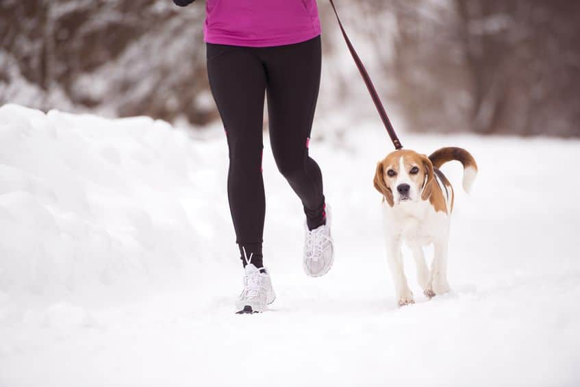 Woman Running with Beagle- 123RF