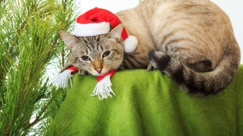 Funny cat in a Santa Claus hat - 123rf
