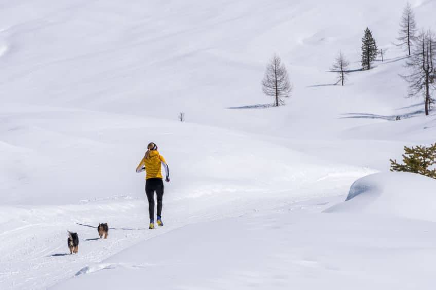 Running with Dogs in Winter - 123RF
