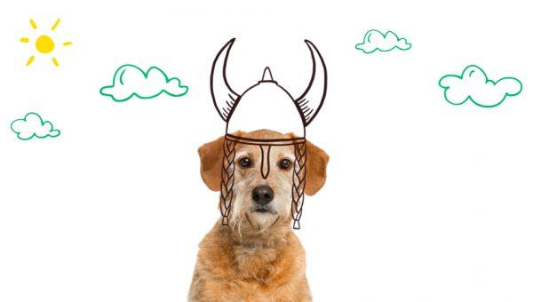 De populäraste vikinganamnen för hundar år 2019