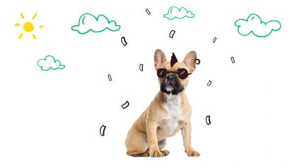 De meest modieuze hondennamen van 2019