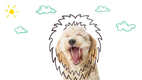 nom de chien inspiré des personnages disney