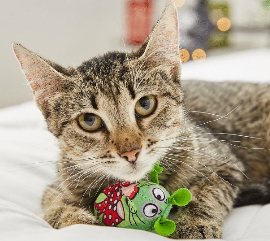 cat with Eeeks! Christmas cat toy
