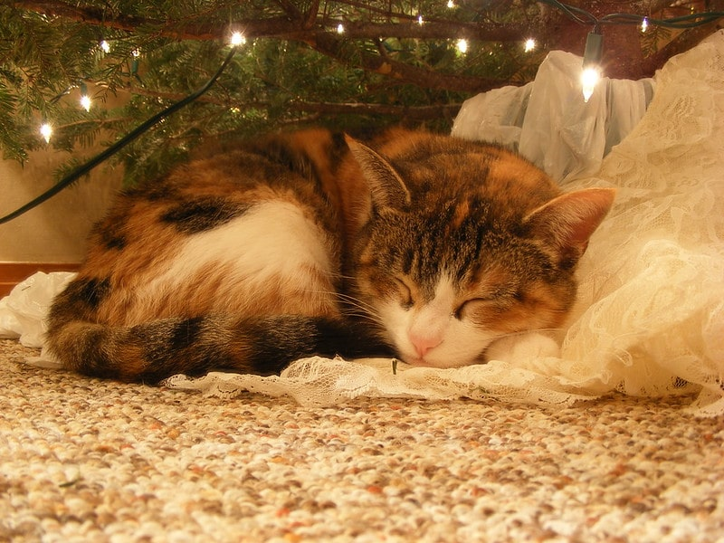 A cat snuggles up under a cat proof Christmas tree