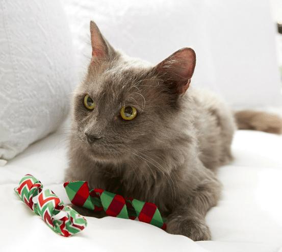 cat with Kong Holiday Active Kurlz