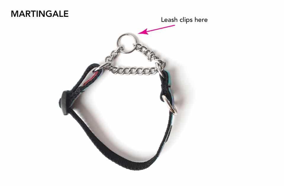 A martingale collar with notes