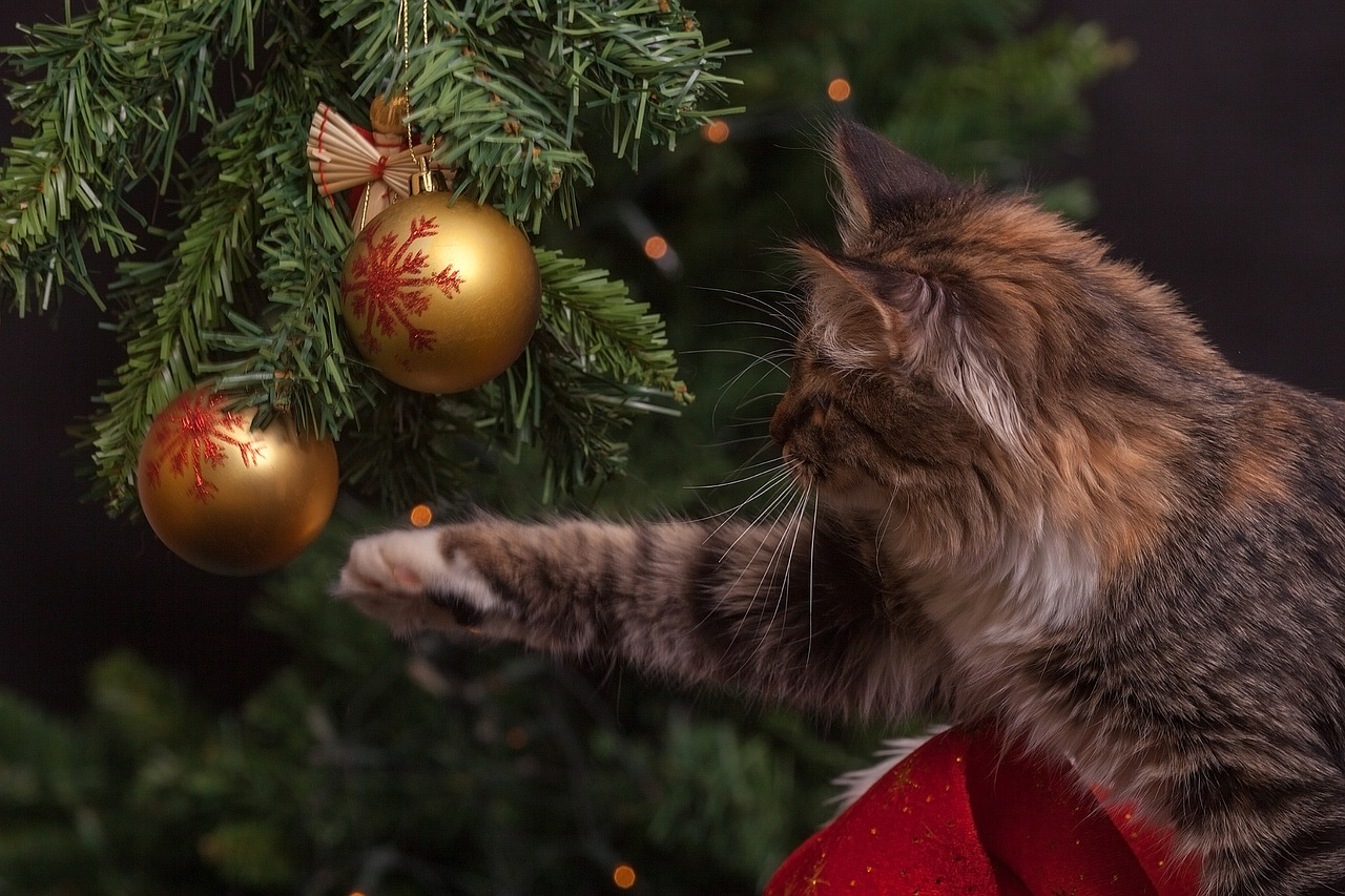 A cat bats at ornaments. A cat proof Christmas tree avoids this.