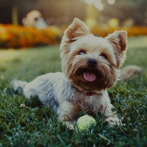 The Top 100 Most Popular Dog Names In 2019 By Breed City And Trends