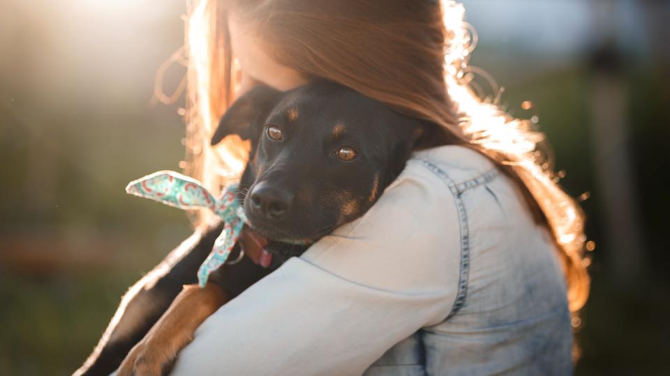 adopter un chien tout ce qu'il faut savoir